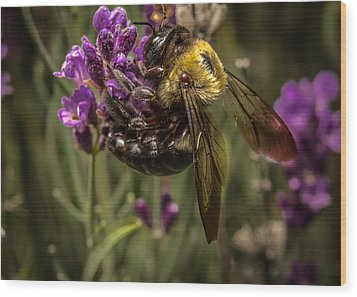 Carpenter Bee On A Lavender Spike Wood Print by Ron Pate