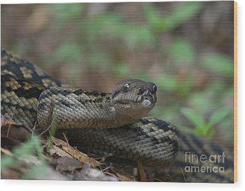 Carpet Snake Wood Print by J Cooper