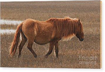 Carrot Island Pony Wood Print by Sharon Seaward