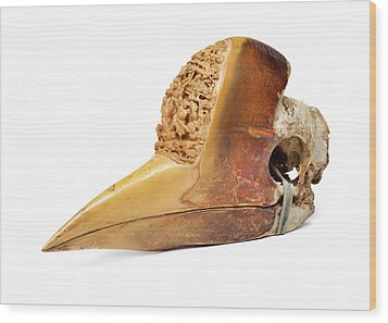 Carved Hornbill Skull Wood Print