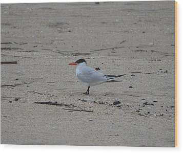 Wood Print featuring the photograph Caspian Tern by James Petersen