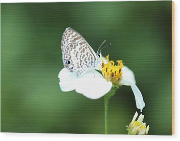 Wood Print featuring the photograph Cassius Blue On Wildflower by Greg Allore
