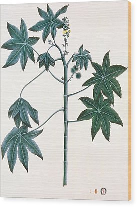 Castor Oil Plant Wood Print by Indian School