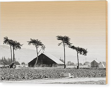Castroville Farming Wood Print