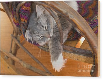 Cat Asleep In A Wooden Rocking Chair Wood Print by Louise Heusinkveld