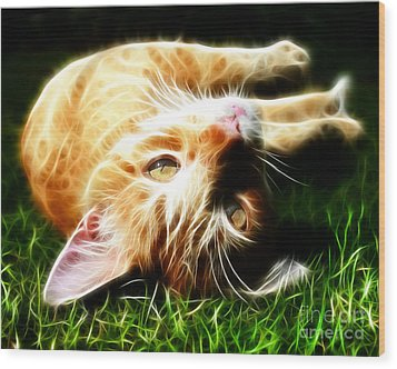 Cat At Play Wood Print by Jo Collins