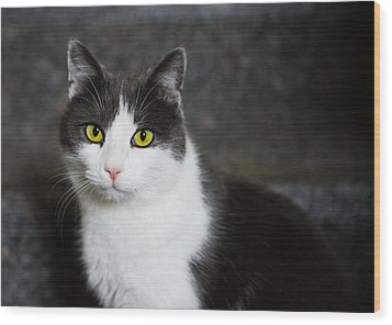 Cat Black And White With Green And Yellow Eyes Wood Print by Matthias Hauser