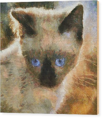 Cat Blue Eyes Wood Print by Yury Malkov