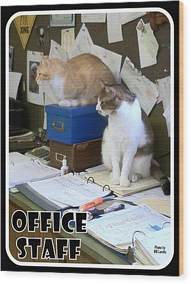 Wood Print featuring the photograph Cat Business by Mary Beth Landis