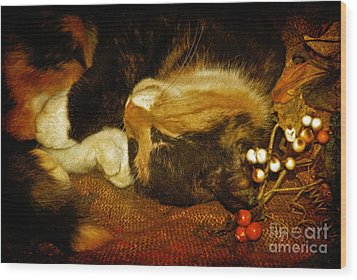 Cat Catnapping Wood Print by Lois Bryan