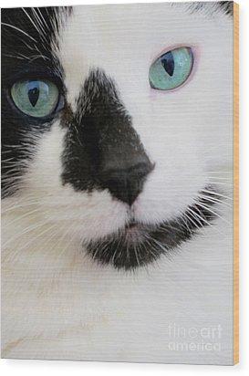 Cat Eyes Wood Print by Birgit Tyrrell