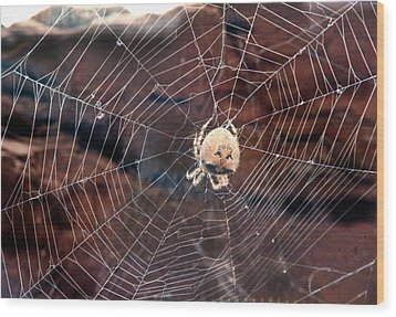 Wood Print featuring the photograph Cat Faced Spider by Tarey Potter