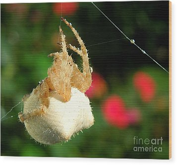 Cat-faced Spider With Pink Wood Print by Heidi Manly