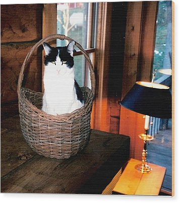 Cat In A Basket Wood Print by Sharon Blanchard
