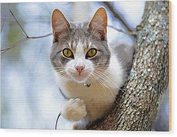 Cat In A Tree Wood Print by Susan Leggett
