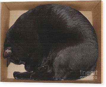 Wood Print featuring the photograph Cat In The Box by Kerri Mortenson