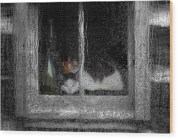 Cat In The Window Wood Print by Jack Zulli