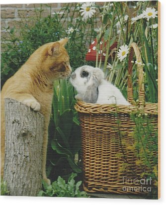 Wood Print featuring the photograph Cat Kisses Rabbit by Jeepee Aero