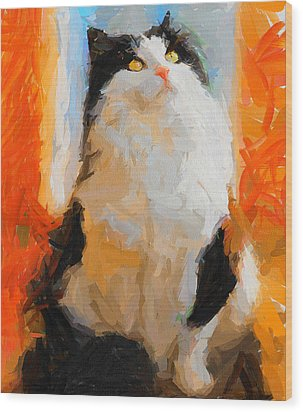 Cat Looking Up Wood Print by Yury Malkov