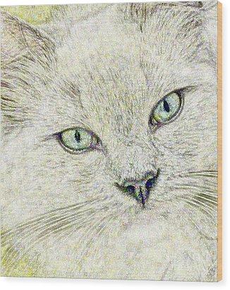 Cat - Mink Ragdoll - Smokey Blu Wood Print by Donna E Pickelsimer