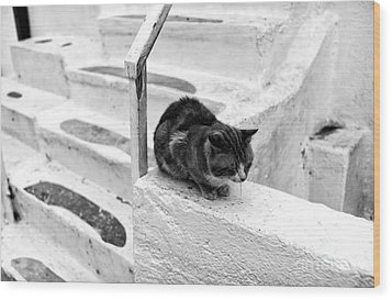 Cat Napping Mono Wood Print by John Rizzuto
