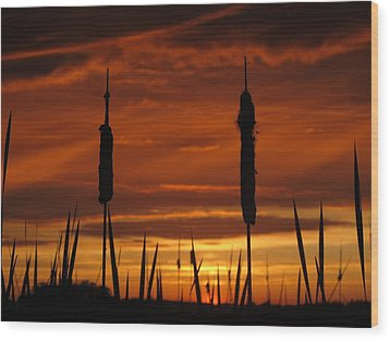 Cat Nine Tails Sunset Wood Print
