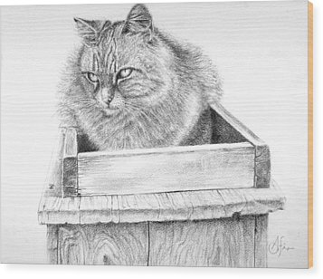 Cat On A Box Wood Print