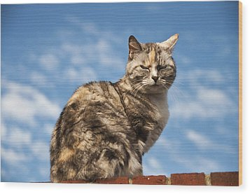 Cat On A Hot Brick Wall Wood Print by Steve Purnell