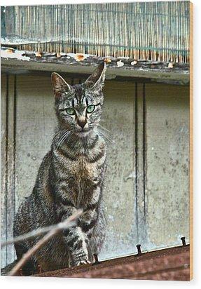 Cat On Roof Wood Print