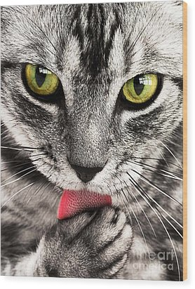 Wood Print featuring the photograph Cat by Paul Fearn