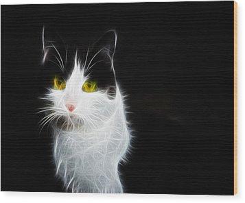 Cat Portrait Fractal Artwork Wood Print by Matthias Hauser