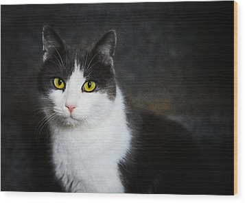Cat Portrait With Texture Wood Print