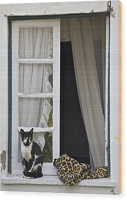 Cat Sitting On The Ledge Of An Open Wood Window Wood Print by David Letts