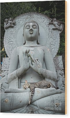 Cat Sleeping On The Lap Buddha Statues. Wood Print by Tosporn Preede
