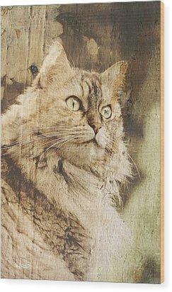 Cat Texture Portrait Wood Print by Raffaella Lunelli