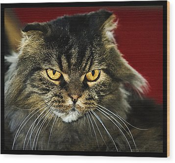Cat With An Attitude Wood Print by Robert Culver