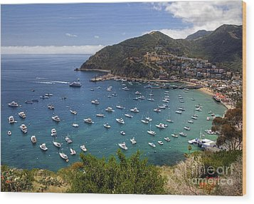 Catalina Island Wood Print