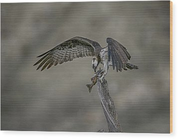 Catch Of The Day Wood Print by Gary Hall