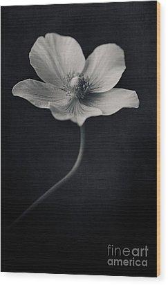 Catch The Light Wood Print by Priska Wettstein