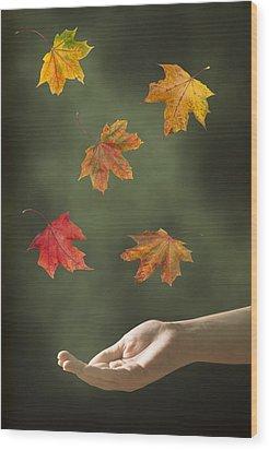 Catching Leaves Wood Print by Amanda Elwell