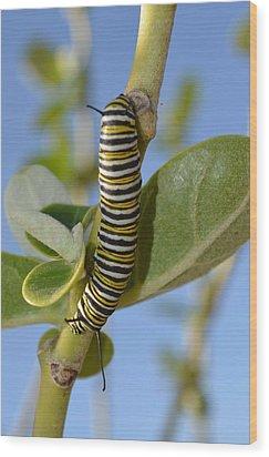 Caterpillar Wood Print by Bonita Hensley