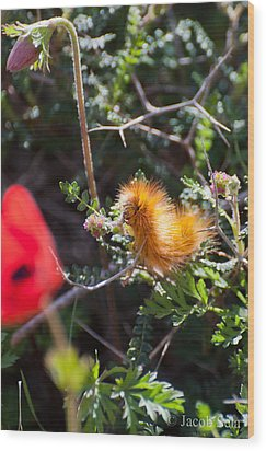 Caterpillar Wood Print by Jacob Sela