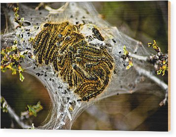 Caterpillars Wood Print