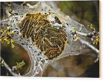 Caterpillars Wood Print by Joel Loftus