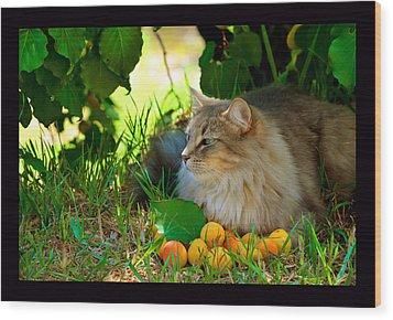 Cat's Mountain Summer Wood Print by Susanne Still
