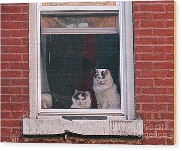 Cats On A Sill Wood Print by Randi Shenkman