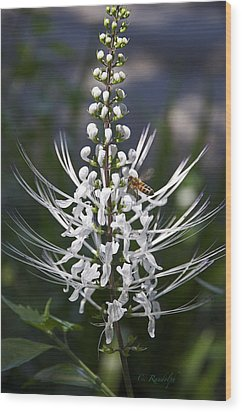 Cat's Whiskers Wood Print by Cheri Randolph
