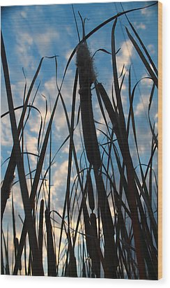 Wood Print featuring the photograph Cattail Sky by Alicia Knust