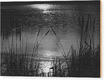 Cattails 3 Wood Print
