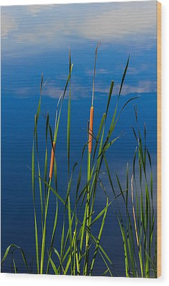 Cattails At Overholster Wood Print by Doug Long